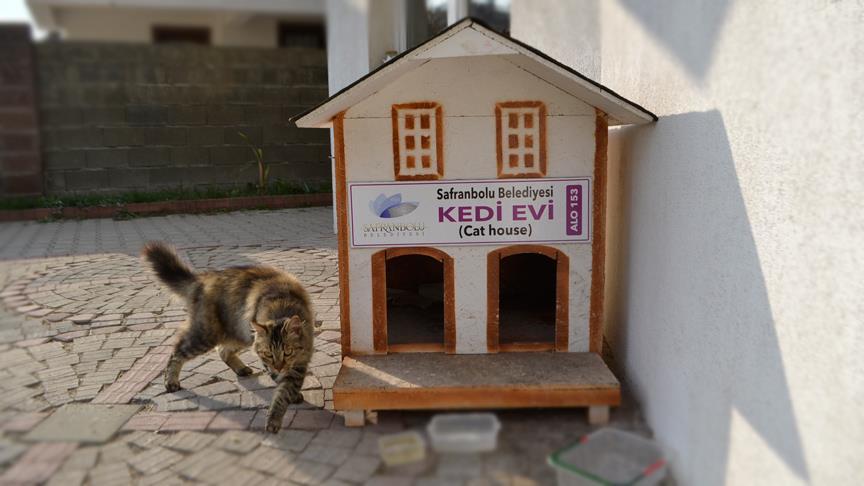 Safranbolu'da tarihi ev görünümlü kedi evleri