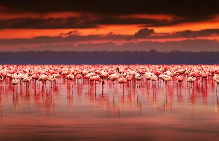 Flamingo cenneti Tuz Gölü'ne turist akını