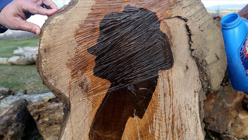 Ağacın gövdesindeki 'kadın silüeti' ilgi çekiyor