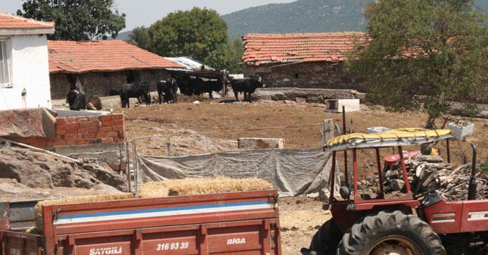 Edirne'de 'Şarbon' karantinası