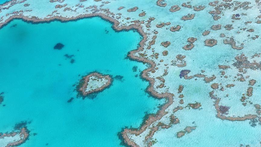 Büyük Set Resifi'ni robotlar koruyacak