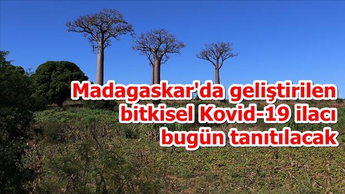 Madagaskar'da geliştirilen bitkisel Kovid-19 ilacı bugün tanıtılacak