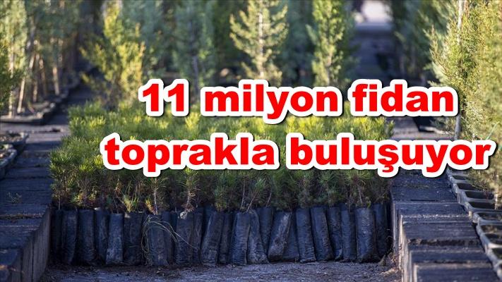 11 milyon fidan toprakla buluşuyor