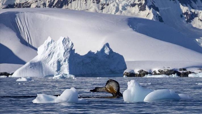 Antarktika'da bulunan 68 milyon yıllık fosil yumurta bir mosazora ait olabilir