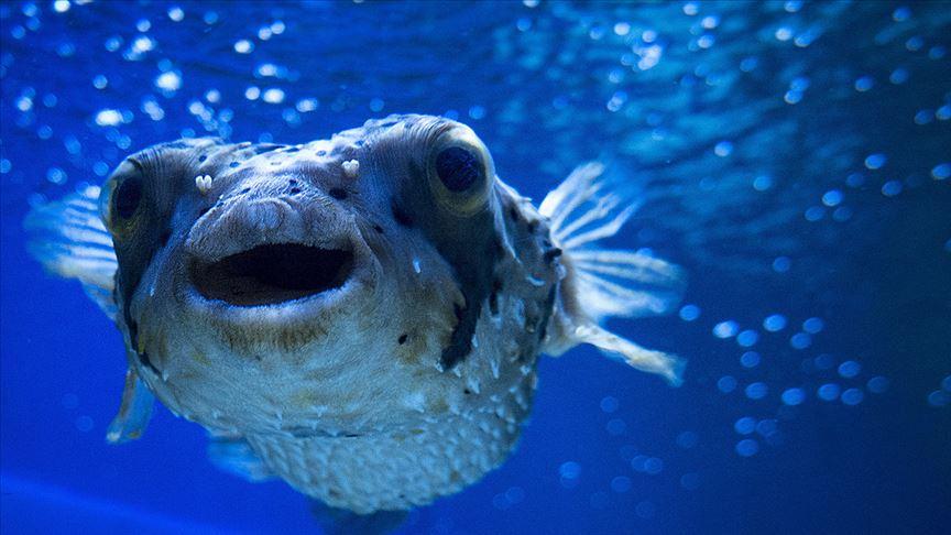 Türkiye'nin denizleri istilacı türlerden korunacak