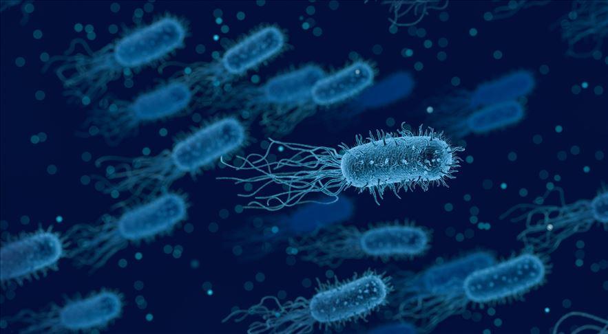 Bağırsaktaki bir bakteri kansere yakalanma riskini artırıyor