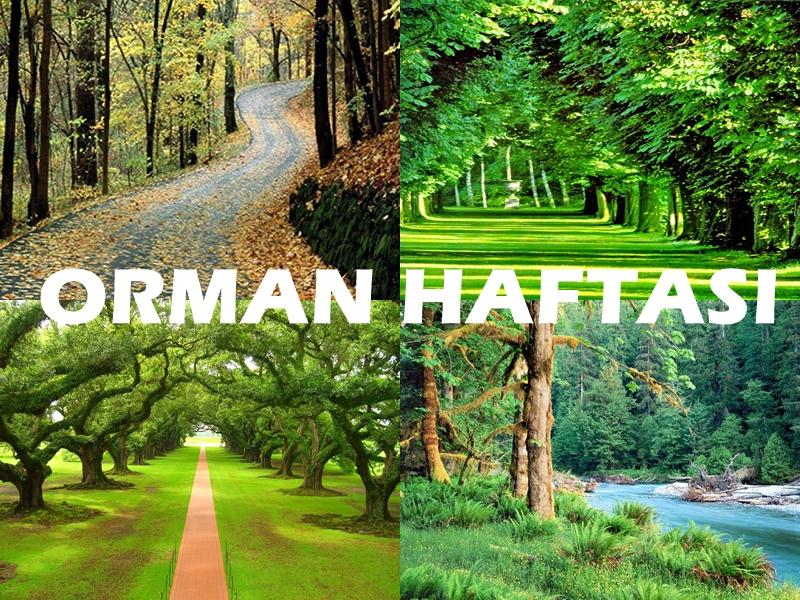 Türkiye'de en fazla ormana sahip bölge hangisi?