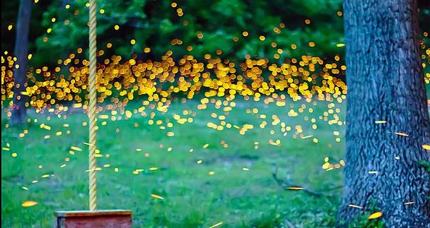 8 Fotoğraf ile Ateş Böceklerinin Dansı
