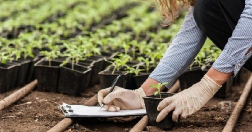 Bitkisel Üretim ve Teknolojileri 2019 Taban Puanları ve Başarı Sıralamaları