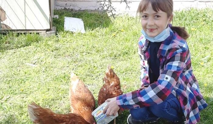 Okul bahçesinde tavuk kümesi