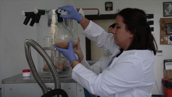 'Bacillus' bakterisinin pet ve naylonu parçalayabildiği belirlendi