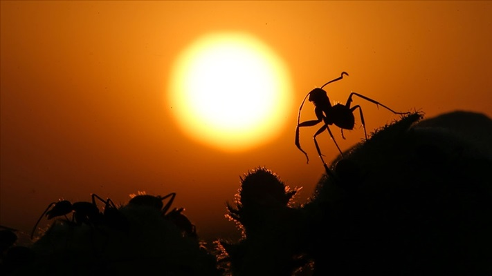 Araştırmalar her yıl böceklerin yüzde 2'sinin yok olduğunu gösterdi
