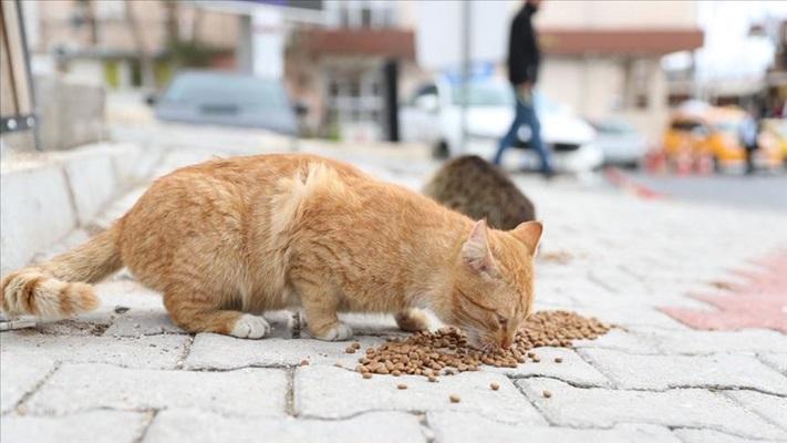 Çevre ve Şehircilik Bakanı Kurum'dan sokak hayvanları için çağrı