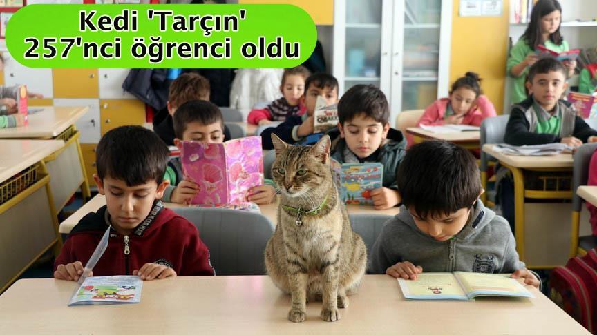 Kedi 'Tarçın' 257'nci öğrenci oldu