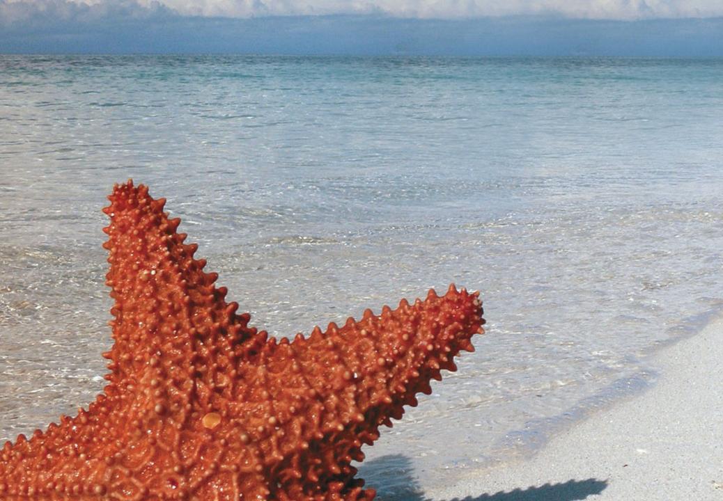 Deniz Yıldızı Proje Yarışması ile liseliler sosyal sorumluluk bilincini öğrenecek