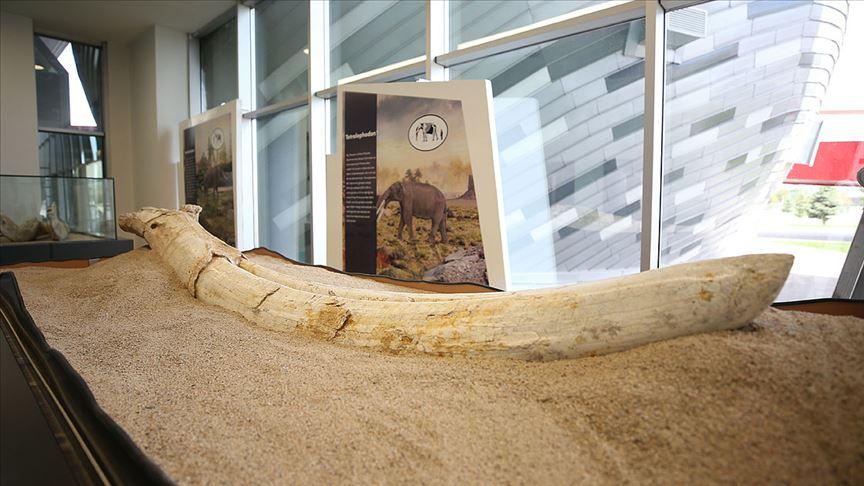 'Kayseri'deki fosiller yeni bir türe ait olabilir'