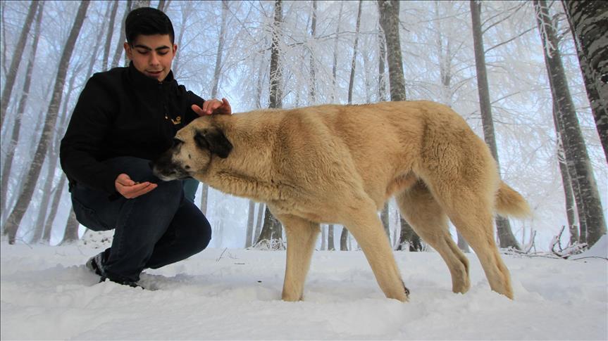 Öğretmen ve öğrencilerden sokak köpeklerine mama desteği
