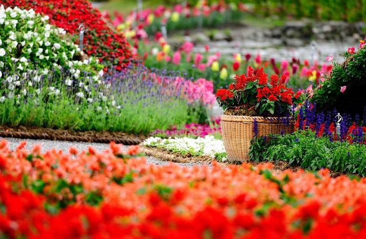 Süs Bitkileri Yetiştiriciliği (2 Yıllık) 2019 Taban Puanları ve Başarı Sıralamaları