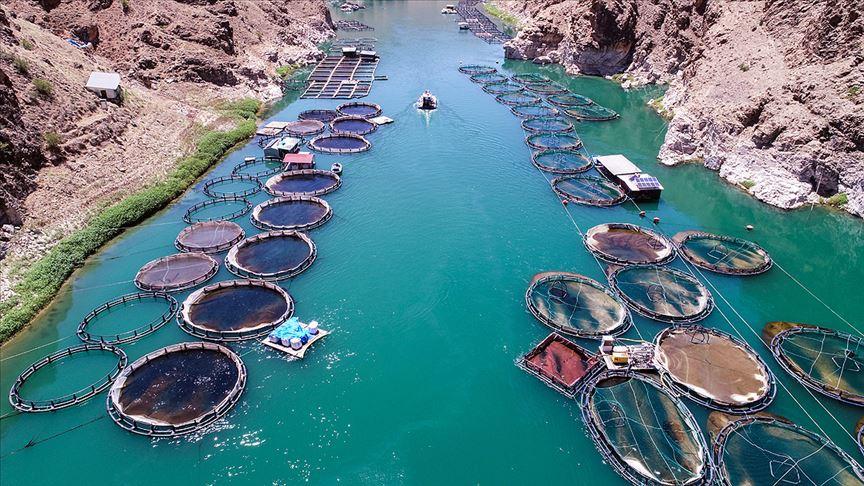 Barajlardaki su ürünlerinden ekonomiye yıllık 940 milyon lira katkı