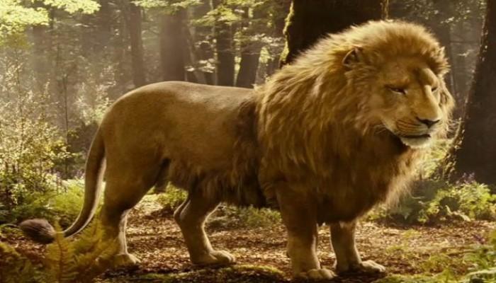 Dünyanın en tehlikeli 12 hayvanı